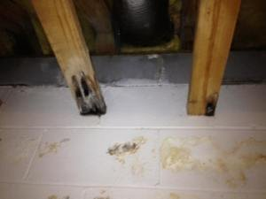 wood with black mold